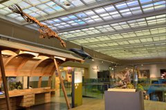 Interior view of a museum showing a seal skeleton and model dolphin suspended from the ceiling. There is a bird of prey in a glass case
