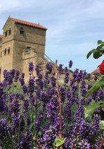 Ancient Roman Herb Garden