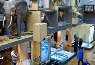 The Living Planet gallery - with a replica life size elephant, a shark and other animals