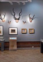 Saltwell Park Museum
