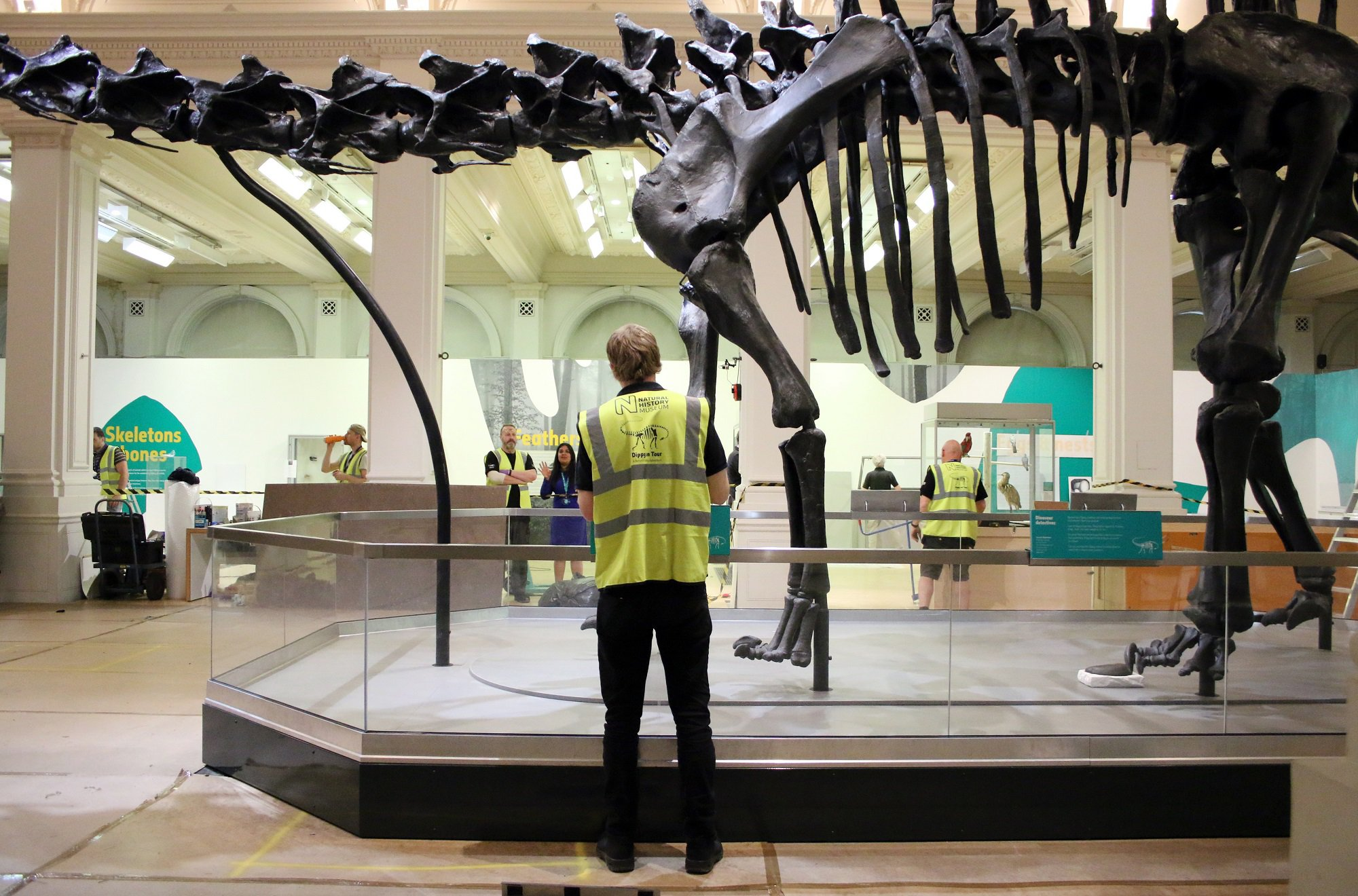 A member of the Natural History Museum team during the installation of Dippy at Birmingham Museum & Art Gallery, May 2018