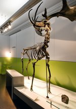 Ice Age to Iron Age Gallery