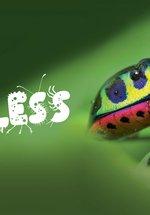 Spineless: Rainforest Creepy Crawlies