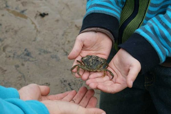 A person holds a small crab in their hands and passes it over to the hands of another person