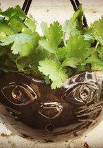 Ceramics Classes: Make Plant Pots
