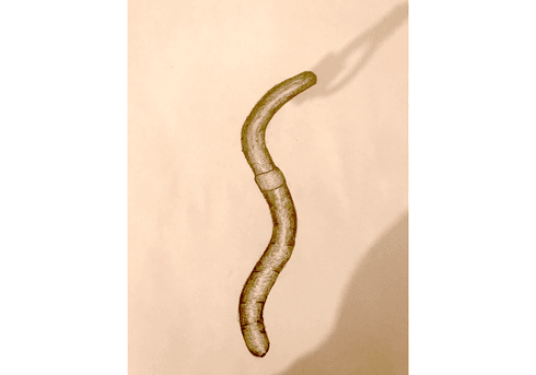 worm drawing