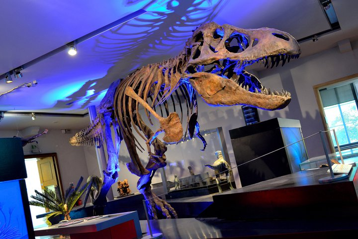 Fossil Stories Gallery | What's On | Great North Museum: Hancock