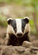 Virtual Animals & Habitats Focus Day
