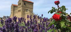Lavender and roses in Roman garden