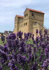 Lavender and roses in front of Arbeia's Roamn West Gate