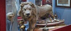 a stuffed lion
