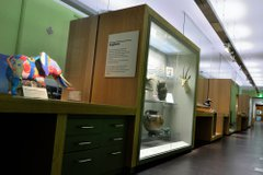 View of a museum gallery showing a multicoloured rubber elephant sculpture and other items in a glass case. There is a Greek pot, a taxidermy wombat and a taxidermy impala head